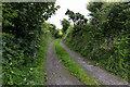 NX9908 : Grass Road towards Snellings Mire by David P Howard