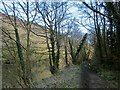SX4371 : Tamar Valley Discovery Trail near Gunnislake by Derek Harper