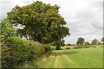 SJ7758 : Hassall Green: footpath along field edge by Jonathan Hutchins