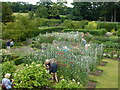 SK9226 : Visitors and sweet peas at Easton Walled Garden by Richard Humphrey