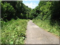 SO5306 : The Wye Valley Walk near Tump Farm by David Purchase