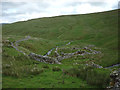 SD8577 : Ruined sheepfold, Cosh Beck Head by Karl and Ali