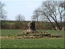 SE3953 : Stone on tumulus, Ribston South Park by Derek Harper