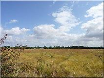 SO9250 : Field off Egdon Lane, B4084, Worcestershire by Jeff Gogarty