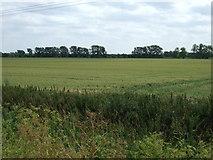 TL6695 : Crop field, New Severals Farm by JThomas