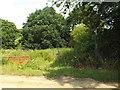 TM1827 : Public footpath near Great Oakley by Malc McDonald