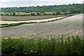 TQ0548 : Fields near the Albury Downs by Alan Hunt