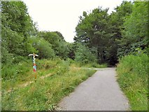 SJ9594 : Trans Pennine Trail at Swains Valley by Gerald England