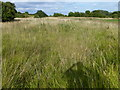 TL0297 : Overgrown former airfield at King's Cliffe by Richard Humphrey