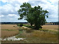 TL0494 : Field boundary near Willow Bank Farm, Woodnewton by Richard Humphrey