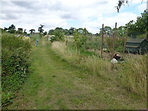 TL0394 : Allotments and free range chickens in Woodnewton by Richard Humphrey