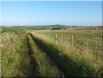 SU6320 : South Downs Way bridleway south of Winchester Hill by Richard Law