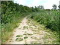 SD4313 : Diverted footpath, south of Martin Mere by Christine Johnstone