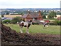 SO8294 : Foal Scene by Gordon Griffiths