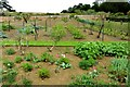 SP3645 : The vegetable garden at Upton House by Steve Daniels