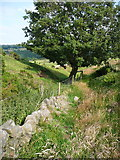 SE0322 : Sowerby Bridge FP140 (Link C) approaching a shady seat by Humphrey Bolton