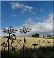 SK4362 : By The Five Pits Trail near Pilsley by Neil Theasby