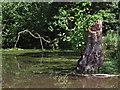 SJ8780 : Farm pond by Stephen Burton