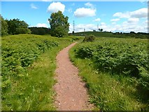 NS5173 : Path to Craigton by Lairich Rig
