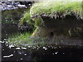 NH4487 : Burrow hole on bend of Allt Coire nan Con in Glencalvie Forest by ian shiell