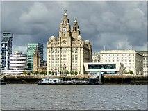 SJ3390 : Liverpool Waterfront, Royal Liver Building by David Dixon