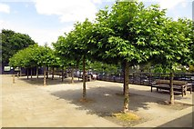 TQ1673 : Trees and benches in the Diamond Jubilee Gardens by Steve Daniels