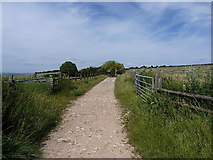 TQ3012 : South Downs Way towards New Barn Farm by Richard Law