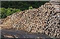 NN1110 : Log pile by David P Howard