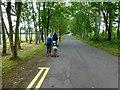 J0458 : Avenue, Tannaghmore Gardens by Kenneth  Allen