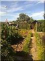TF5281 : Vegetable garden by Richard Hoare