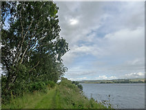 NH5557 : Path beside the Cromarty Firth by Julian Paren