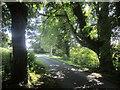 SY3393 : Liberty Trail near Rhode Barton by Derek Harper