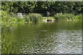 TQ1478 : Middle Lake, Osterley Park by Alan Hunt
