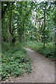 TQ2371 : Path through woodland on Wimbledon Common by Mike Pennington