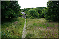 SM7525 : Footpath round the back of St David's Cathedral by Bill Boaden