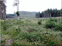 J3630 : Clear felled forest land  on the south-eastern slopes of Drinnahilly by Eric Jones