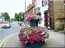 TF0920 : Welcoming floral displays at Bourne, Lincolnshire by Rex Needle