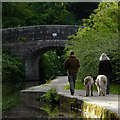 SJ9652 : Walking the dogs near Cheddleton, Staffordshire by Roger  Kidd