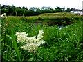 H4772 : Long grass, Cranny by Kenneth  Allen