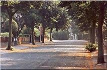 SJ7886 : Grange Avenue, Hale by Anthony O'Neil