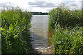 SU8440 : Reed beds, Frensham Great Pond by Alan Hunt