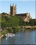 SO8454 : Worcester Cathedral, the Severn and some swans by John Sutton