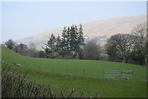 SD7186 : A field in Dentdale` by N Chadwick