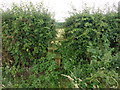 SJ7286 : Overgrown stile near Little Bollington by Dave Dunford