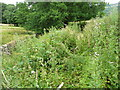 SE0322 : Thistles, nettles and brambles on Sowerby Bridge FP142, Link D by Humphrey Bolton