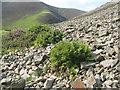 NS8510 : Parsley Fern in the Mennock Pass by M J Richardson