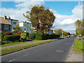 TV4899 : Clipped hedge and sickly tree, Upper Belgrave Road, Seaford by Robin Stott