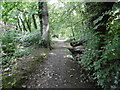 SC3392 : Bishopscourt Glen, path by Mike Faherty
