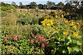 TF8742 : Flowers in garden at Holkham Hall by Philip Halling