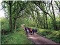 SN0714 : Coed Canaston Woods by Alan Richards